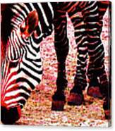 Colorful Zebra - Buy Black And White Stripes Art Canvas Print