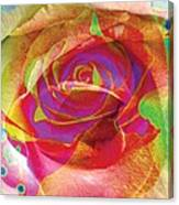 Colorfull Rose Canvas Print