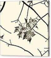 Colorless Autumn Canvas Print