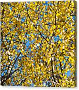 Colors Of Autumn - Yellow - Featured 3 Canvas Print