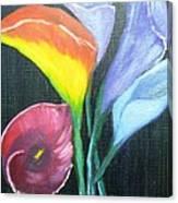 Colors Of Calla Lillies Canvas Print