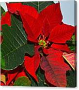 Colors Of Christmas Canvas Print