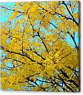 Colors Of Fall 1 Canvas Print