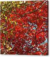 Colors Of Fall 3 Canvas Print