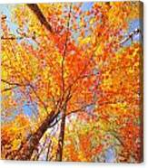 Colors Of Leaves Yellows Oranges 2884 Canvas Print