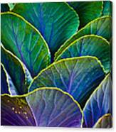 Colors Of The Cabbage Patch Canvas Print