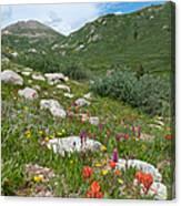Colors Of The Rainbow - Colorado Mountain Summer Canvas Print