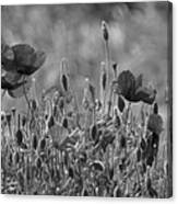 Colour Blind Poppies 2 Canvas Print