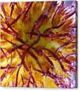 Colour Convolution Canvas Print