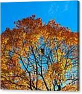 Colourful Autumn Tree Against Blue Sky Canvas Print