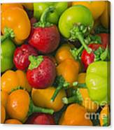 Colourful Mini Bell Peppers Canvas Print