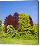 Colourful Trees Canvas Print