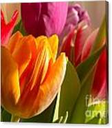 Colourful Tulips In Sunlight Canvas Print