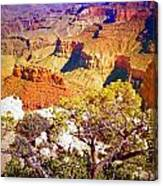 Colours Within The Canyon Canvas Print