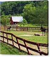 Colts On A Farm Canvas Print