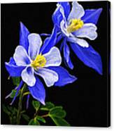 Columbine Duet Canvas Print