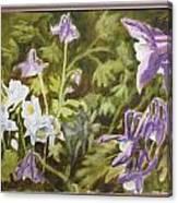 Columbine Canvas Print