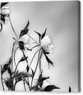 Columbines In Black And White Canvas Print
