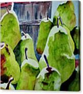 Columbus Pears Canvas Print