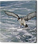Coming In For Landing... Canvas Print