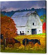 Coming To The Barn Canvas Print