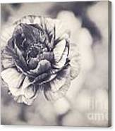 Coming Up In Black And White Canvas Print