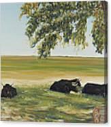 Commanche National Grasslands La Junta Colorado Canvas Print