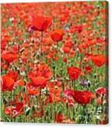 Commemorative Poppies Canvas Print