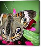 Common Buckeye Junonia Coenia Canvas Print