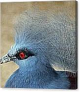 Common Crowned Pigeon Canvas Print