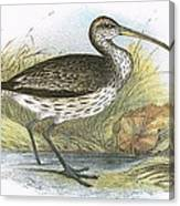 Common Curlew Canvas Print