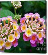 Common Lantana Flower Canvas Print