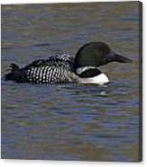 Common Loon 51 Canvas Print