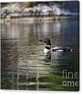 Common Loon On Northern Lake Canvas Print