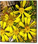 Common Madia On Sheep Creek Geological Loop In Flaming Gorge National Recreation Area-utah  Canvas Print