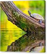 Common Map Turtle Canvas Print