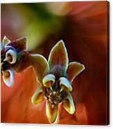 Common Milkweed Canvas Print
