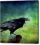 Common Raven Canvas Print