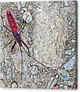 Common Red Bug Along The Seti River Road-nepal  Canvas Print