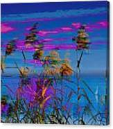 Common Reeds At Sunrise Canvas Print