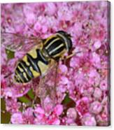 Common Tiger Hoverfly Canvas Print