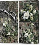 Common Yarrow Collage Canvas Print