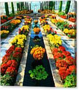Como Conservatory's Fall Display. St Paul Minnesota. Canvas Print