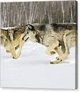 Competing Canvas Print