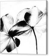 Petal Abstract Canvas Print