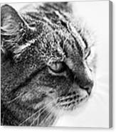 Concentrating Cat Canvas Print