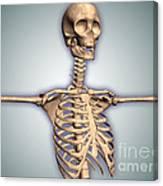 Conceptual Image Of Human Rib Cage Canvas Print