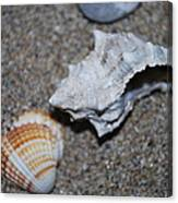 Conch 2 Canvas Print