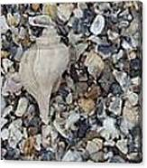 Conch Among A Sea Of Shells Canvas Print