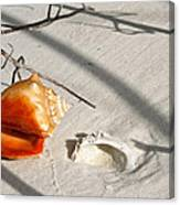 Conch With Shell In Sand I Canvas Print